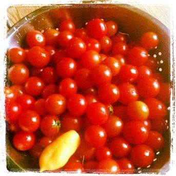 Tomatid. Ja üks tšilli