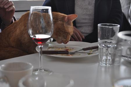 Veel üks Pärnu kollane kass.